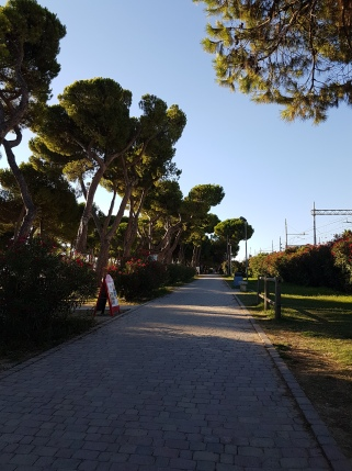pineta pineto